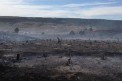 Garfield County Fire Torches 200 Acres Cedar City News