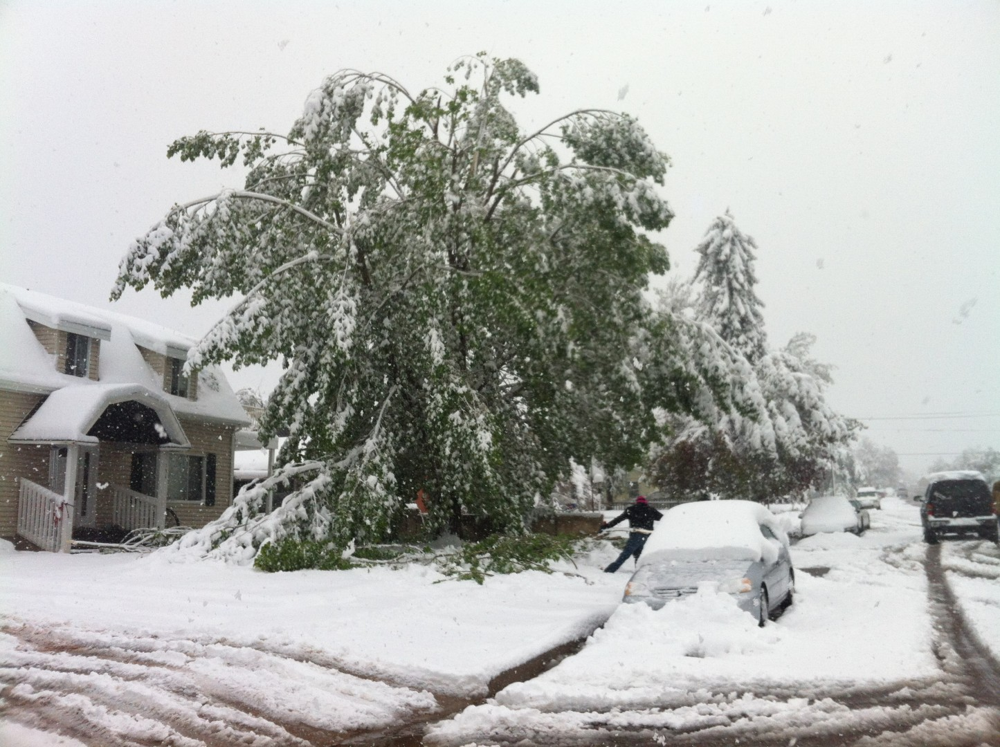 Tree branches buckle under the weight of spring snowfall, Cedar City, Utah, May 11, 2014 | Photo by Kevin Robison, St. George News