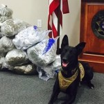 Washington County Sheriff's K-9 Tess sniffed out 56 pounds of marijuana during a traffic stop on Interstate 15 Exit 5, St. George, Utah, Aug. 24, 2015 | Photo courtesy of the Washington County Sheriff's Office, St. George News