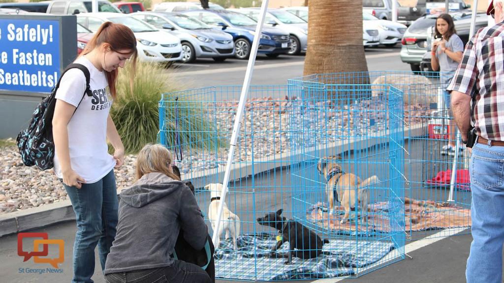 Findlay Subaru Hosts Pet Adoption Event Cedar City News