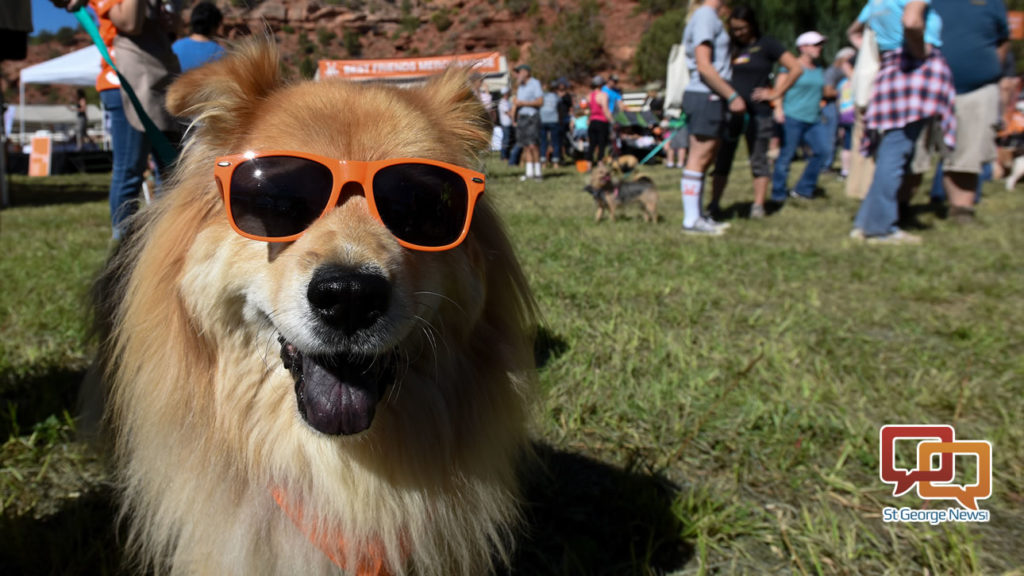Salt Lake Dog Rescue Groups
