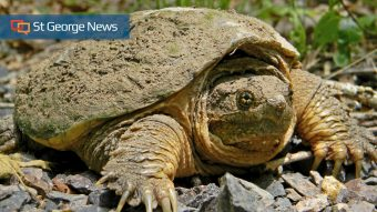 Idaho teacher accused of feeding puppy to turtle is charged