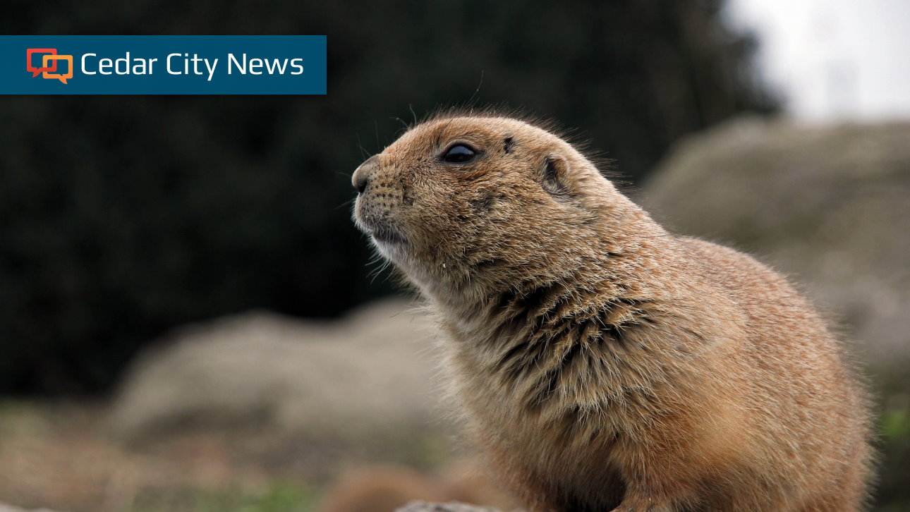 Several People Potentially Exposed To Pe After Working With Prairie Dogs Cedar City News