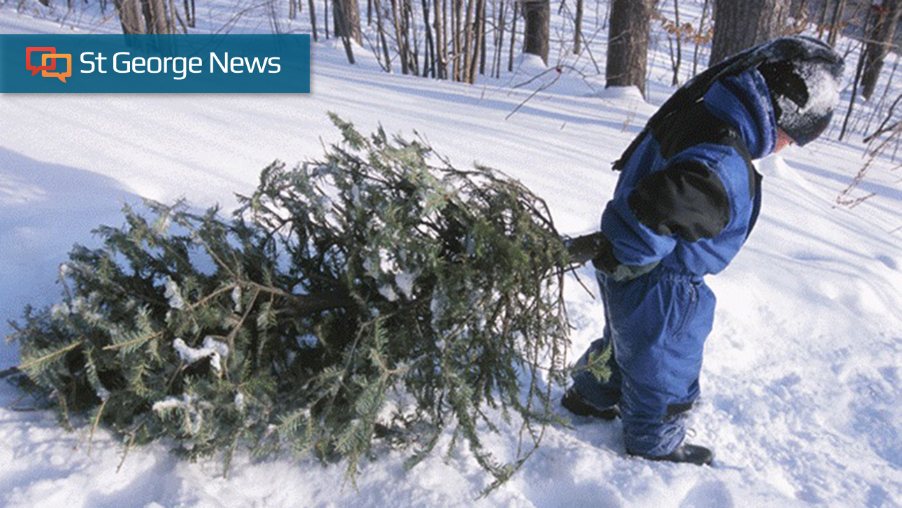 An 'exciting holiday tradition': Bureau of Land Management ...